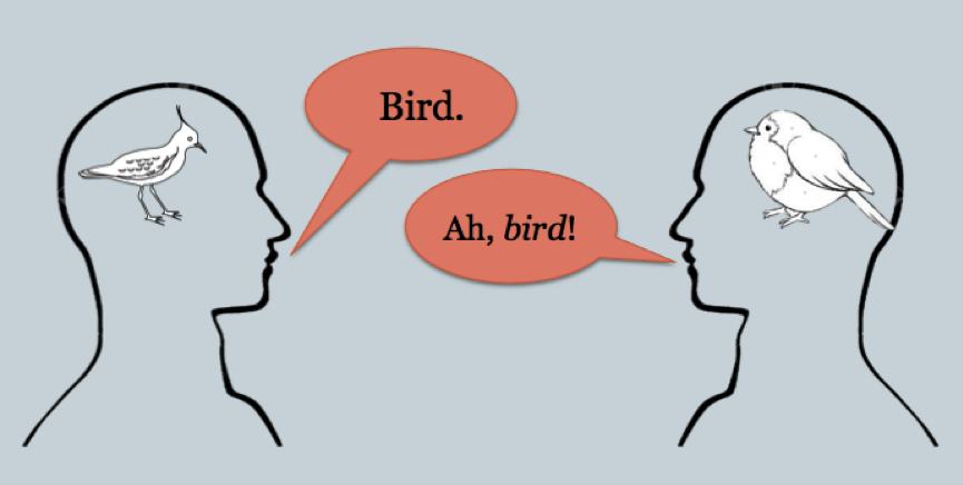 Epidemiology 1 bird